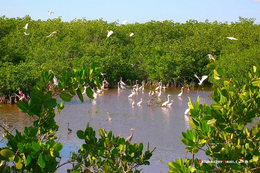 Aves a Cayo Coco y Cayo Guillermo, Cuba
