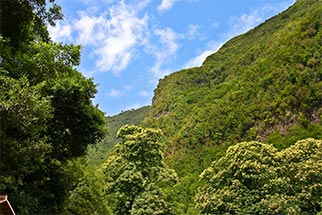 Isla La Palma. Los Tilos y los Nacientes de Marcos y Cordero