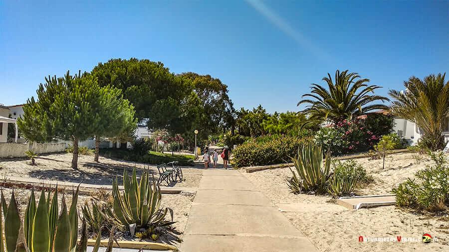 Isla Armona, Algarve