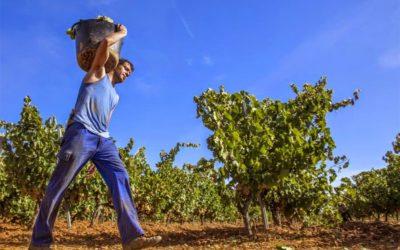 Recogida de la uva, recogida de ilusiones. ¡Septiembre huele a vendimia!