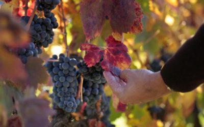 Vivanco: Compartiendo la cultura del vino en La Rioja