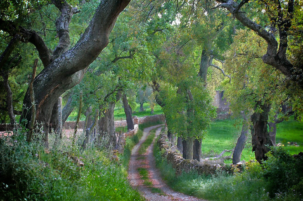 Ruta del Bosque Encantado. De Fuenteheridos a Galaroza