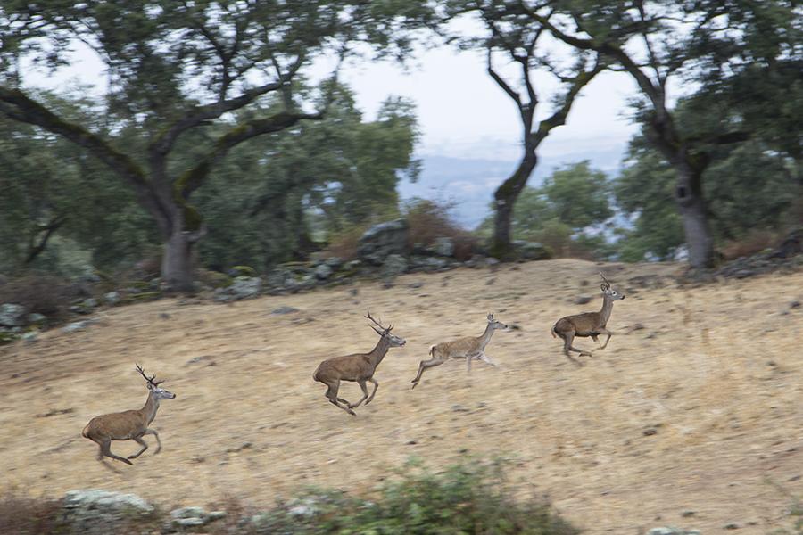 Parque Natural Sierra de Hornachuelos, un territorio repleto de tesoros ecológicos