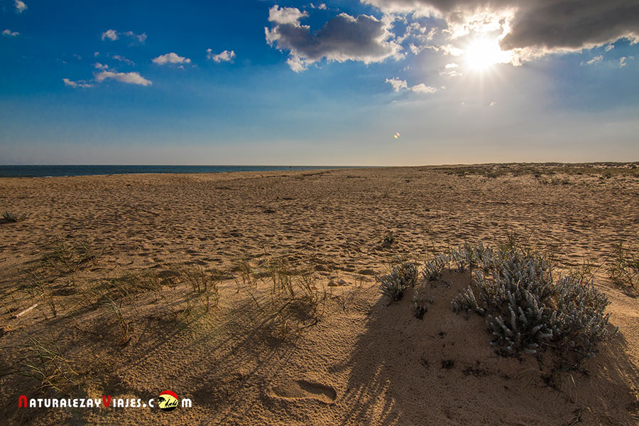 Ilha Deserta, Algarve