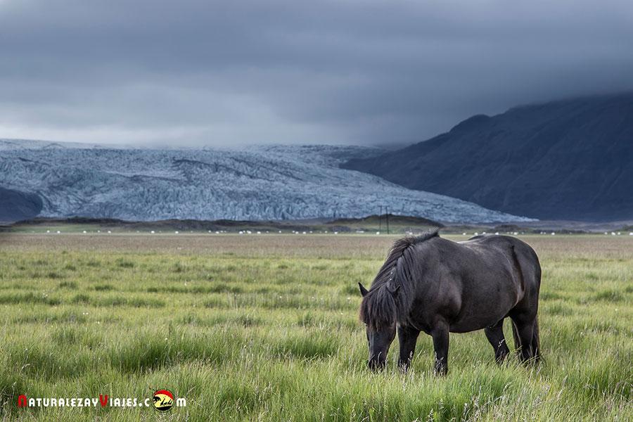 Visitar el glaciar Flaajokull, uno de los consejos para viajar a Islandia