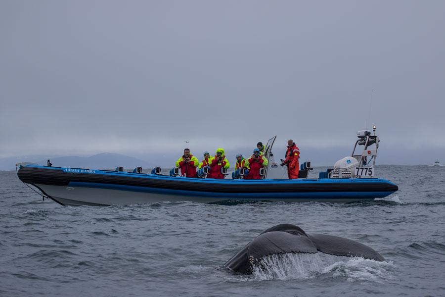 Avistamiento de ballenas, uno de los consejos para viajar a Islandia