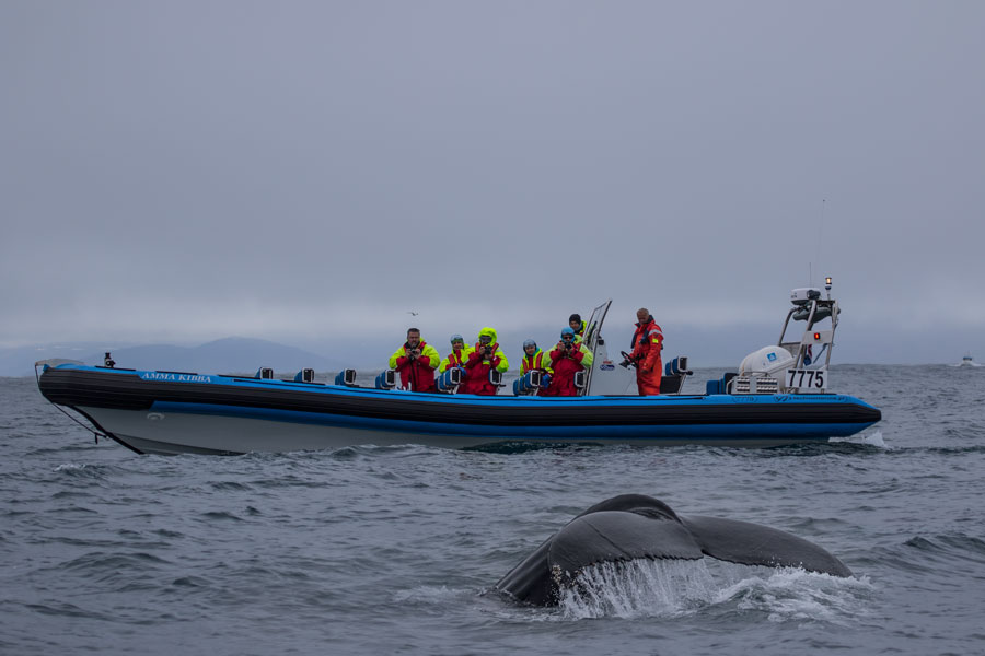 Lancha rápida para avistamiento de ballenas en Húsavík, Islandia