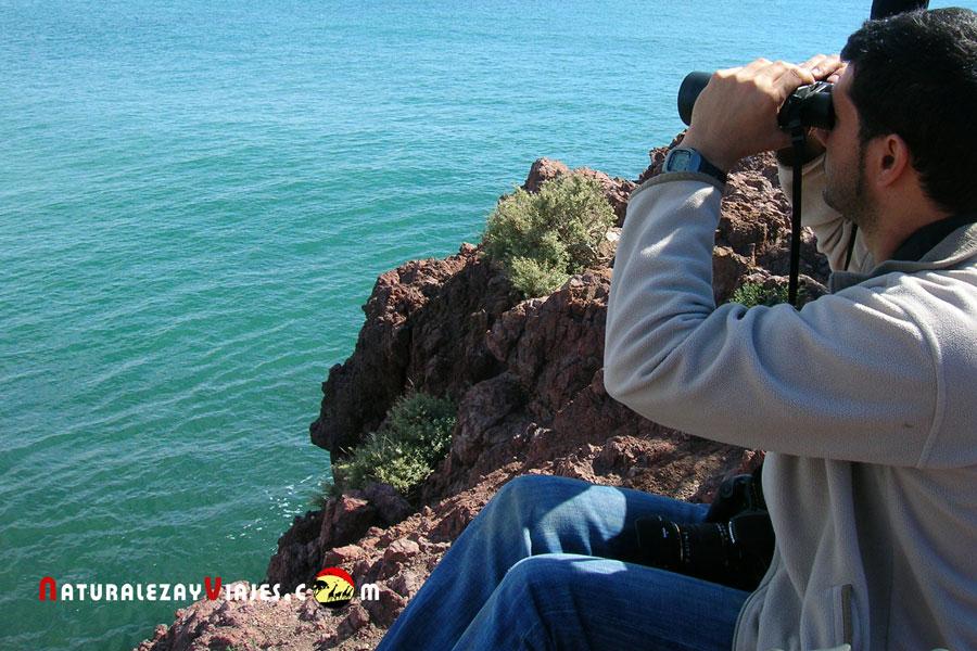 Birdwatching Fitz Roy, Argentina
