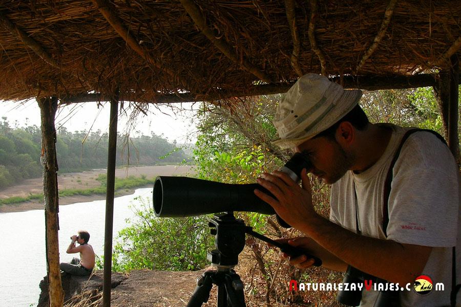 Birdwatching en Gambia