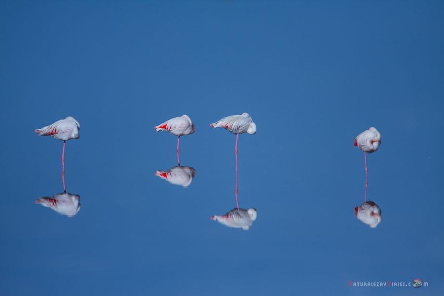 Dónde ver aves en el Algarve, Portugal
