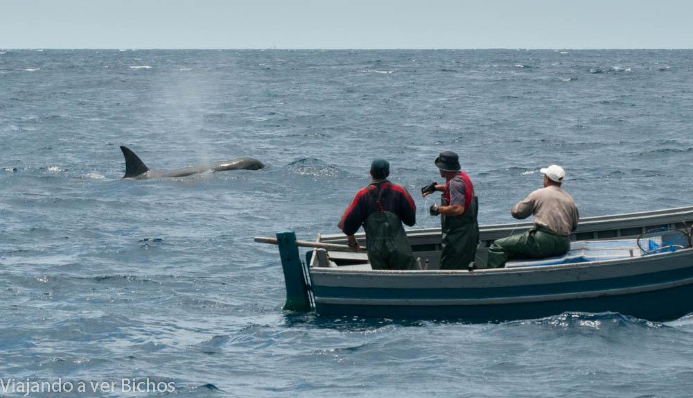 Orca junto a pescadores del Estrecho