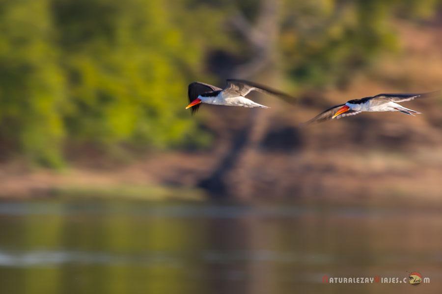 Kafue, Zambia