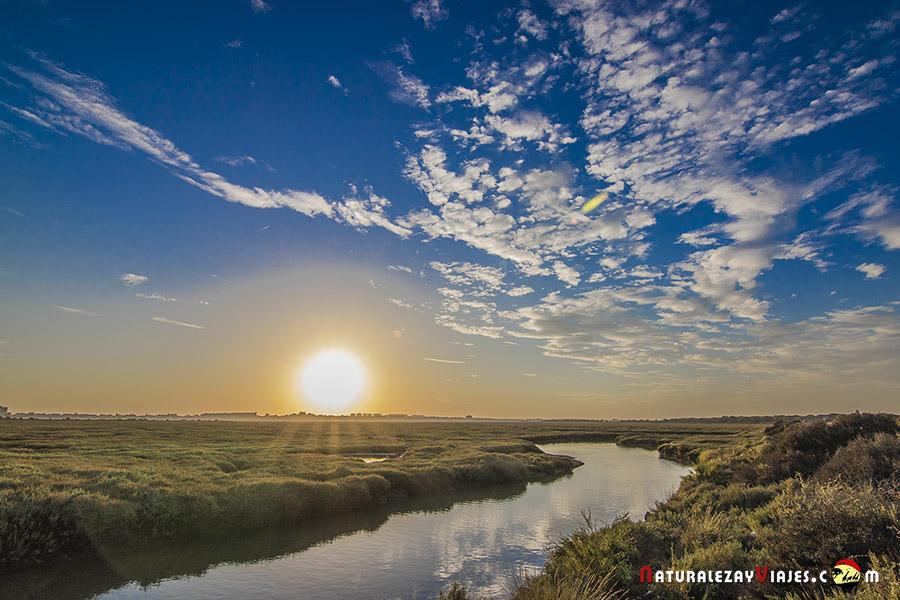 Marismas del Odiel, un lugar ideal para visitar en Huelva
