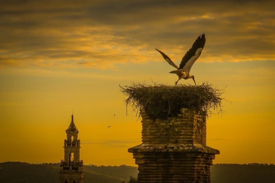 Qué ver y hacer en Jerez de los Caballeros, un gran tesoro de Extremadura