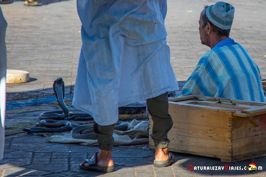 Encantador de serpientes en la Plaza Jemaa El Fna de Marrakech, Marruecos