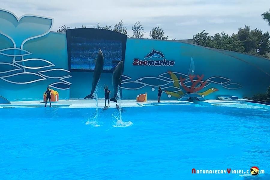 Delfines en Zoomarine, Algarve