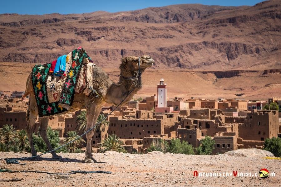 Kasbahs en las Gargantas del Todra, Marruecos