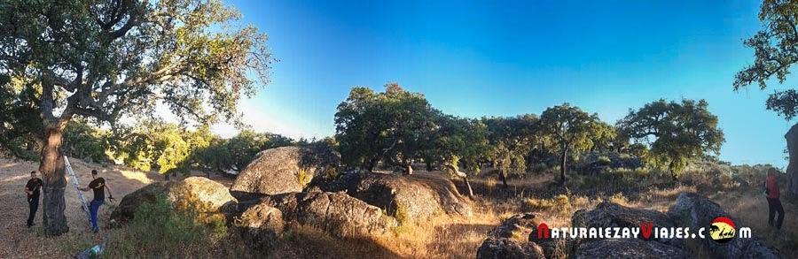 Descorche en Extremadura
