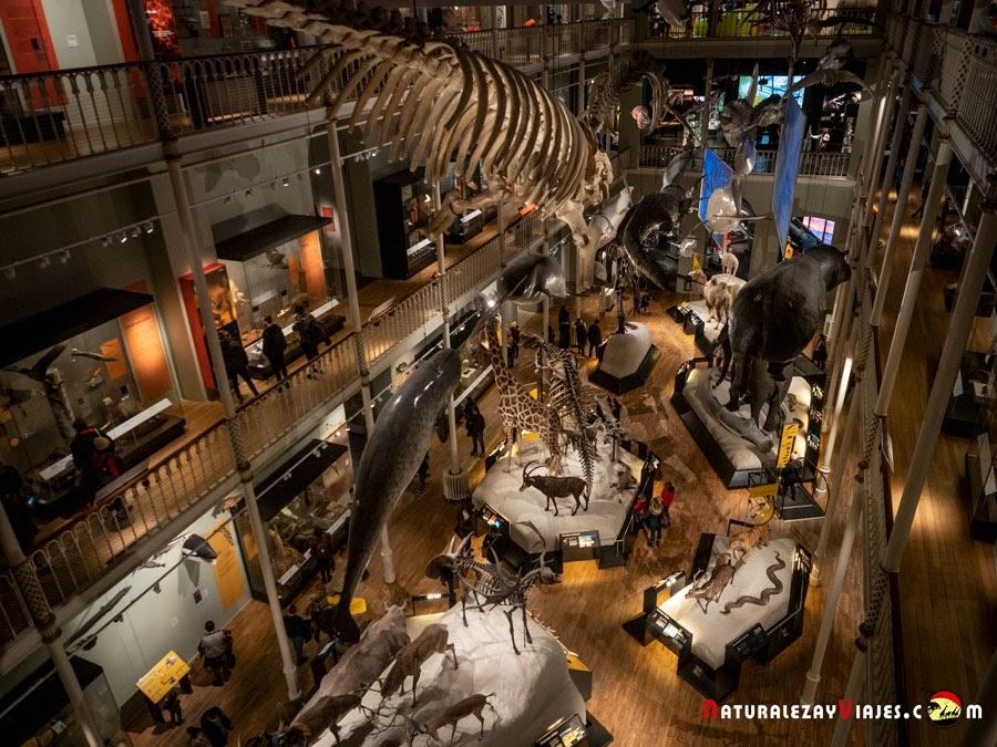 Museo Nacional de Escocia