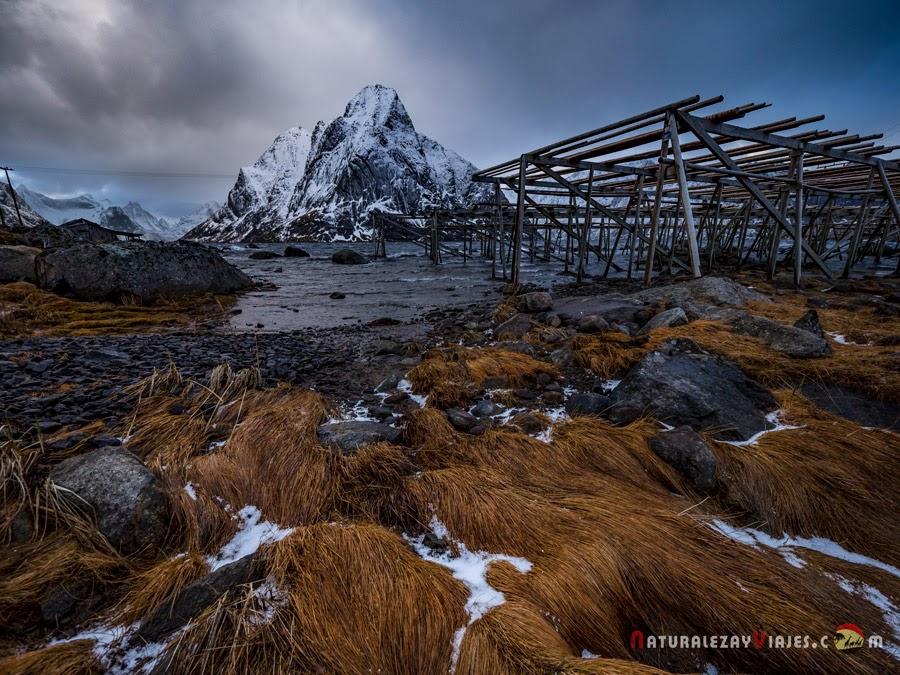 Secadero de bacalao en Islas Lofoten