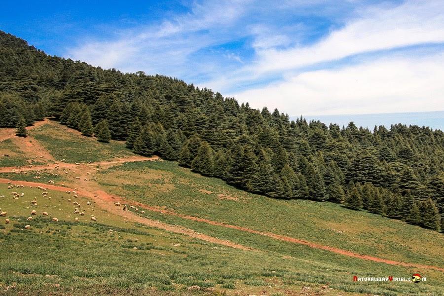 Parque Nacional Jbel Tazeka, Marruecos