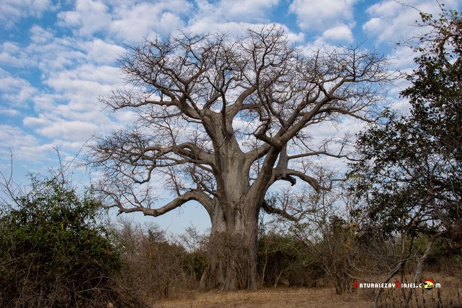 Parque Nacional Niokolo-Koba, Senegal