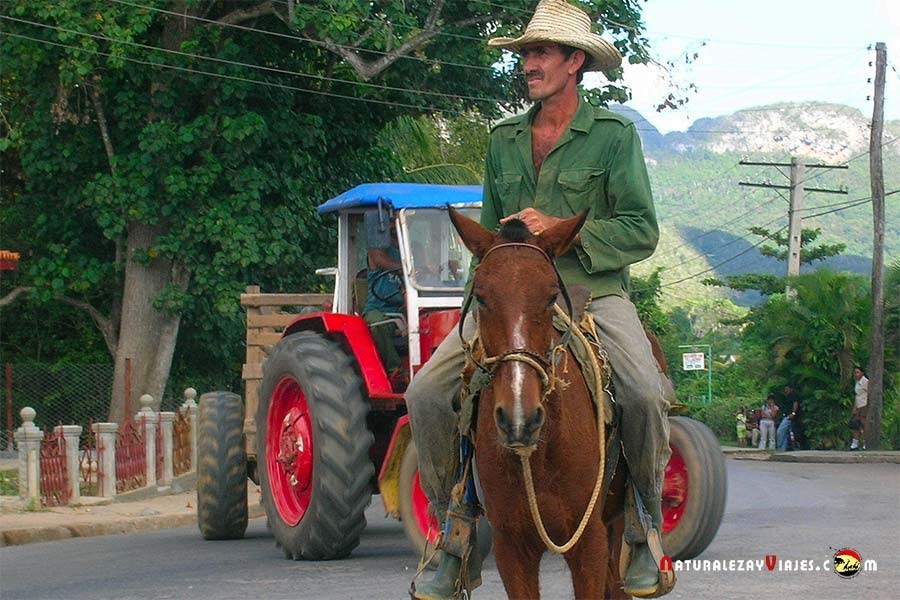 Guajiro en Viñales