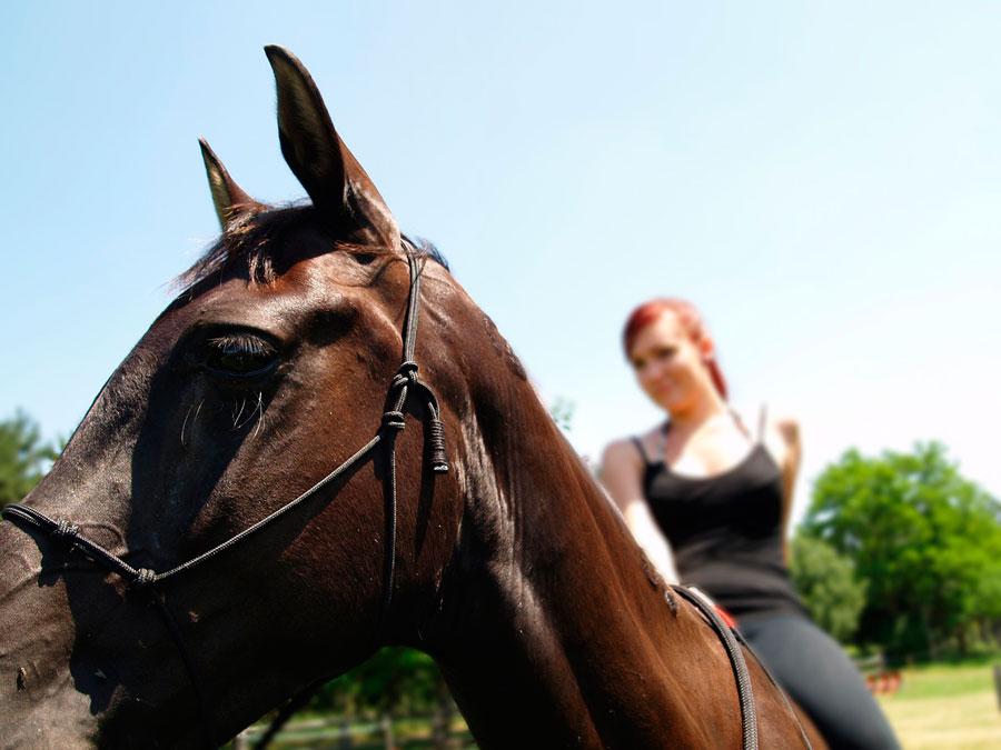 excursion caballo por Alpujarra Granada