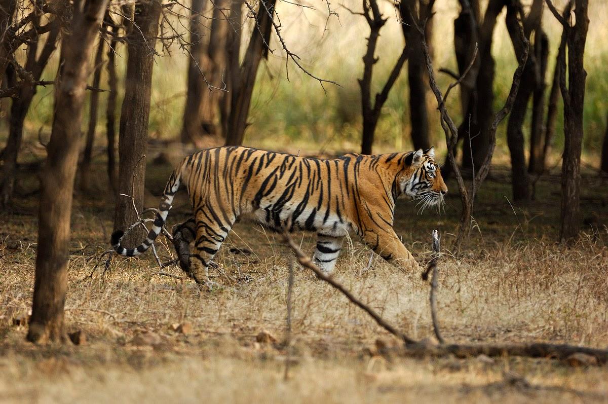 Viajar a los Parques Nacionales de la India