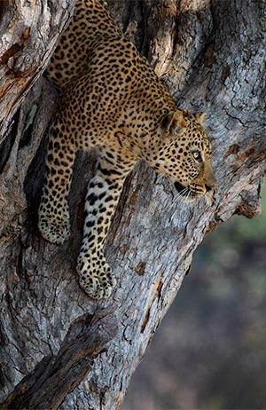 Parque Nacional Kafue (Zambia). La película
