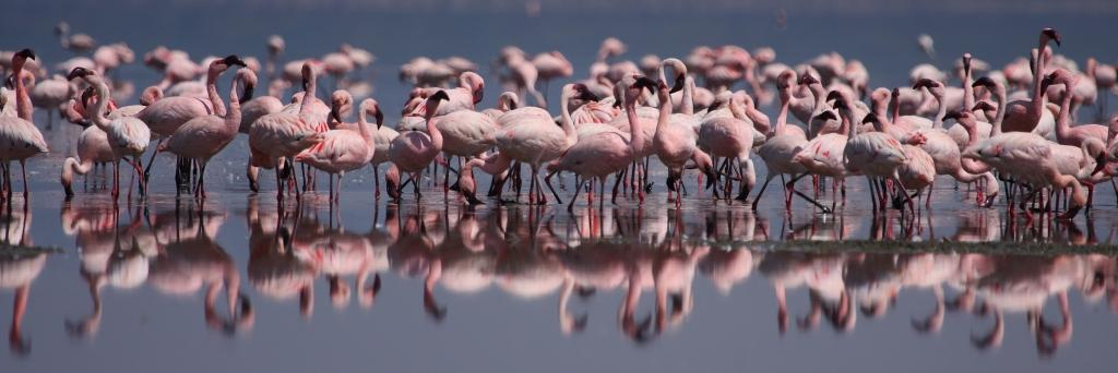 Aves de Kenia
