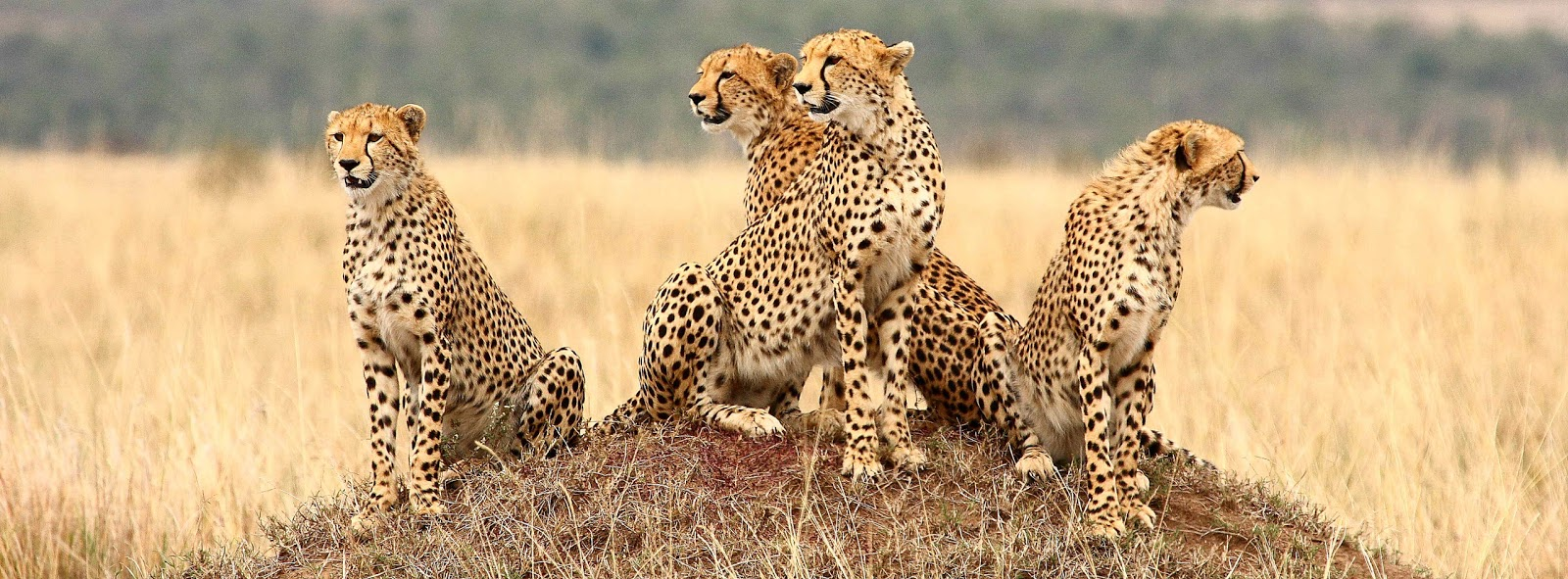 Reserva Nacional Masai Mara (1ª parte)