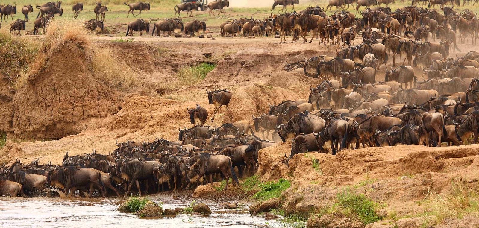 Reserva Nacional Masai Mara (2ª parte)
