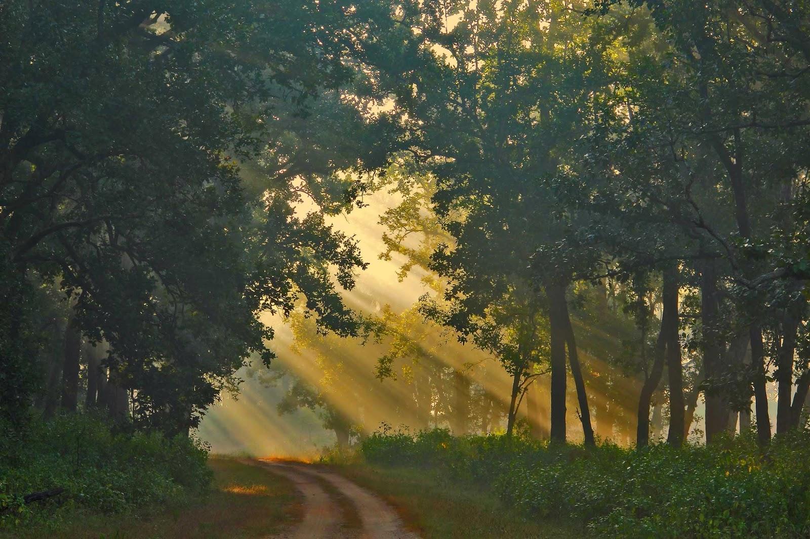 Parque Nacional de Kanha, India