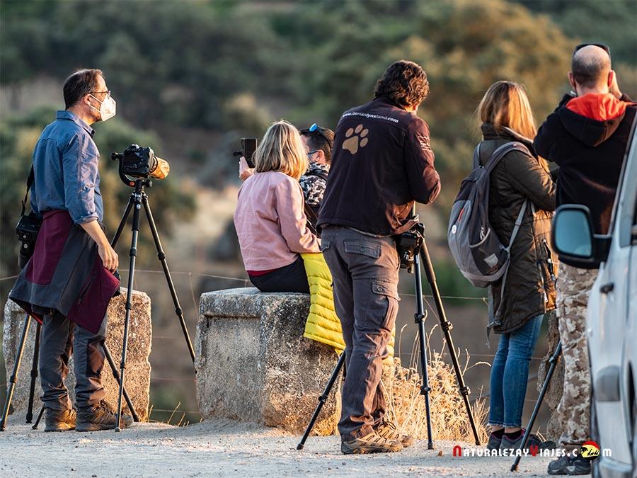 Buscando lince en la Sierra de Andújar
