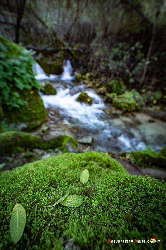 Ruta del río Majaceite en la Sierra de Grazalema