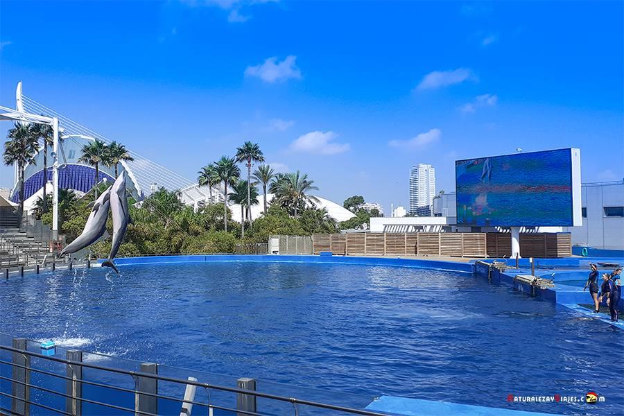 Delfines oceanografic Valencia